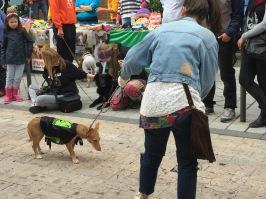 Desfile de perros en la Calle Gutenberg