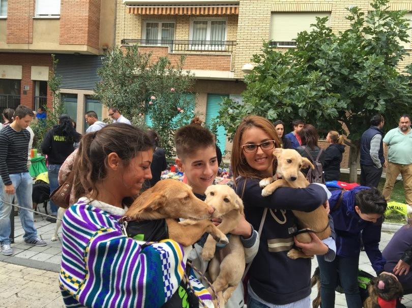 Perros participantes den el desfile