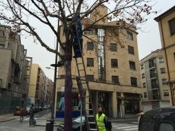 Iluminación para los árboles de la Plaza del Oeste